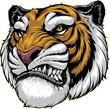 Ferocious tiger roars