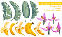 Tropical Collection. Banana Leaves, Fruits And Flowers In Realistic Style With High Details. Exotic Elements For Wedding Or Summer Background, Decorative Poster, Patterns, Wallpapers, Fabric, Prints.