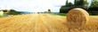 canvas print picture - Harvested grain field and straw bales