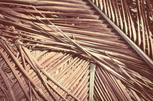 Grunge Texture Of Dry Palm Tre...