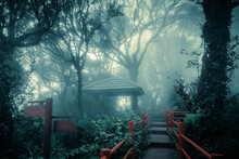 Mysterious Foggy Forest With W...