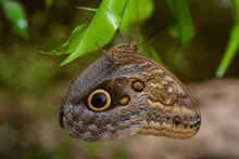 Farfalla, Tropicale, Lepidottero,