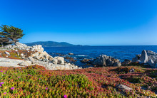 View Of Carmel Bay And Lone Cyprus At Pebble Beach, 17 Mile Drive, Peninsula, Monterey