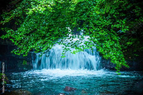 Poster Trees 雨の日の滝