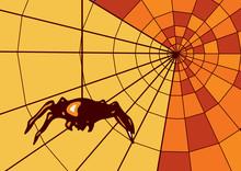 Spider On Web. Geometric Orange Web. Orange. Background In Cold Tones.
