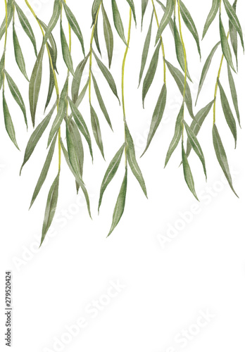 Tablou Canvas Willow leaves isolated on white background.