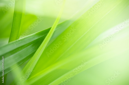 fototapeta na drzwi i meble Close up of nature view green leaf on blurred greenery background under sunlight with bokeh and copy space using as background natural plants landscape, ecology wallpaper concept.