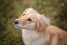 Portrait Of A Dog