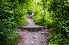 Hiking Path In Forest Leading ...