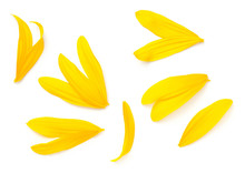 Sunflower Petals Isolated On W...