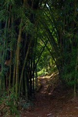 The road between the bamboo.