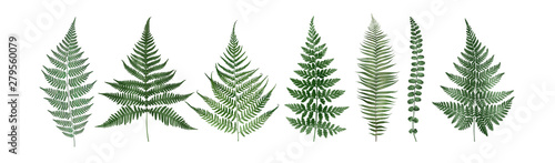 Stampa su Tela Set of fern leaves isolated on white