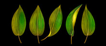 Set Of Exotic Tropical Leaves Isolated On Black. Watercolor Illustration.
