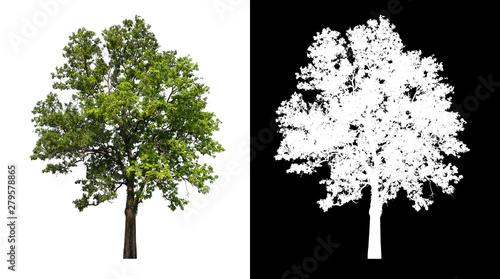 Fotografía  single tree with clipping path and alpha channel