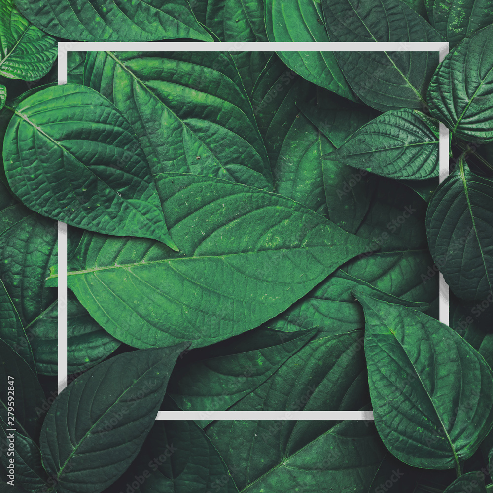Fototapeta Frame layout green leaves blank paper card ,Natural background.Flat lay