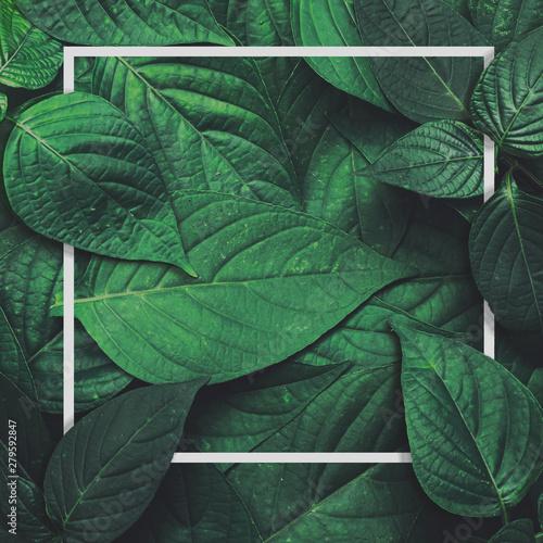 Fototapeta  Frame layout green leaves blank paper card ,Natural background