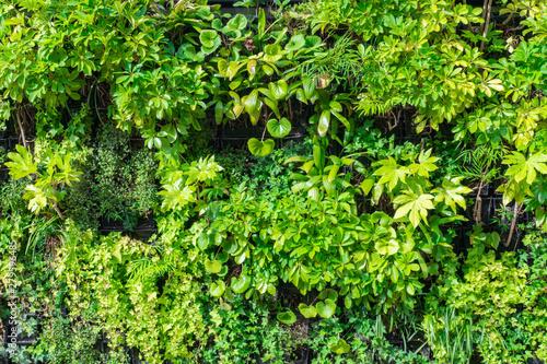 Foto  壁面緑化