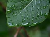 Po deszczu
