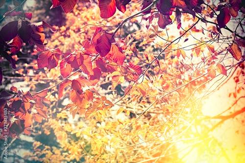 Canvastavla Beautiful nature in autumn, autumn leaves lit by sunlight - sun rays