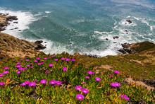View Of Coastal Wildflowers, P...