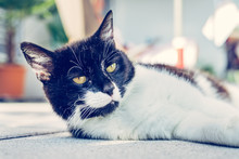 Cute Cat Is Enjoying The Summer. Black White Cat Is Lying On The Veranda, Blurry Colorful Background