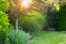 Summer Garden With Decorative Trees And Plants