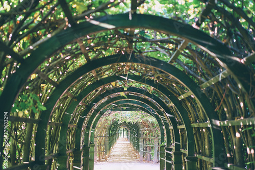 Green plant park tunnel. Gardening design. Canvas-taulu
