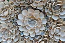 Vintage Handmade Sea Shell Flo...