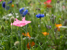 Close Up Of English Wildflowers In Summer