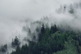 View of foggy mountains. Trees in morning fog - 279656895