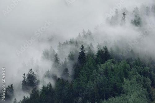 widok-na-mgliste-gory-drzewa-w-porannej-mgle