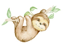 Sloth Watercolor Drawing. Children's Illustration Digital Paper, Print For Children's Clothes