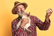Close Up View Of Friendly Senior Farmer Looking Proudly At Fresh Egg, Holding In Hand Small Hen, Inspecting Hen Coops And Collecting Eggs For Sale On Local Organic Market.