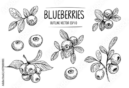Papel de parede Sketch of blueberry. Hand drawn outline converted to vector