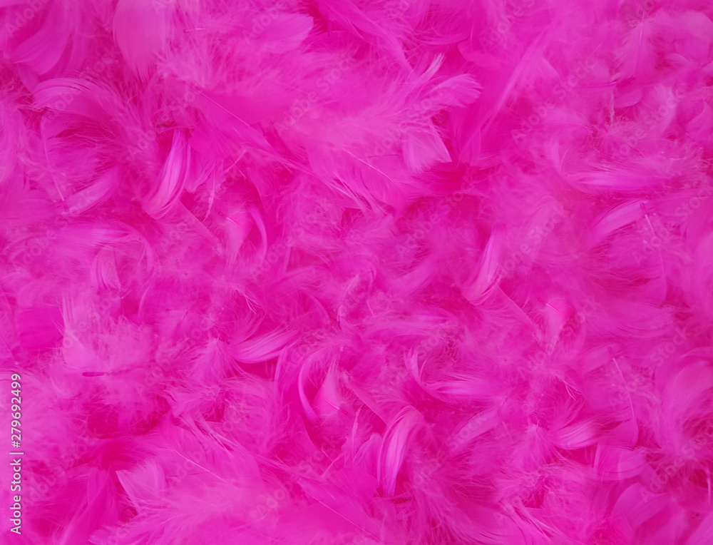 pink feather texture background