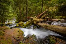 Fallen Logs At Panther Creek Falls