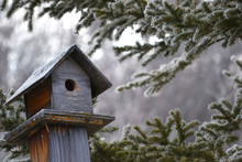 Winter Bird House In Pine