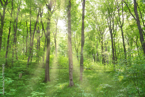 Foto auf AluDibond Pistazie Green forest landscape with trees and sun light going through leaves
