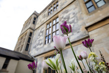 Pink Flowers And Audley End Ho...