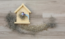 Decorative Birdhouse Front With Decorative Bird On A Background With Bird Seed And Spanish Moss