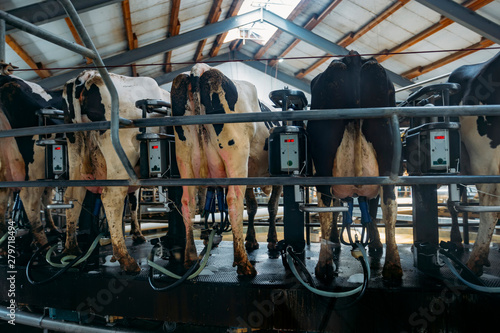 Valokuva Milking cows by automatic industrial milking rotary system in modern diary farm
