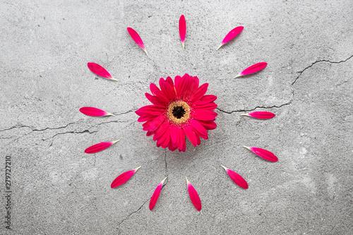 Poster de jardin Gerbera A bright red gerbera daisy with circular red petals pattern