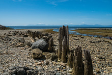 Dry Rocky Coast Covered With G...
