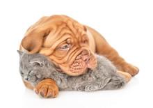 Mastiff Puppy Embracing Sleepi...