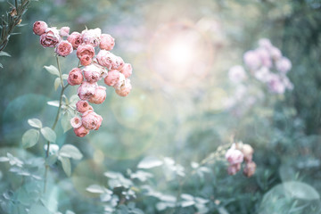 Romantic vintage rose flowers in diffuse sun light with bokeh - Retro filter background