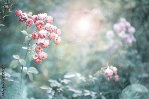 Romantic vintage rose flowers in diffuse sun light with bokeh - Retro filter ba Canvas Print