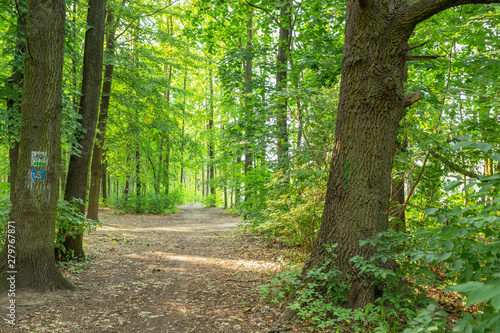 Fotografie, Obraz  path in the forest