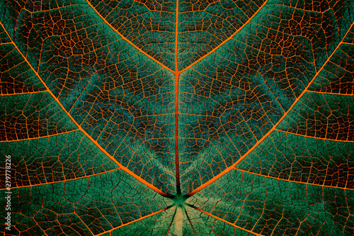 Biomimetics - Biomaterials - Synthetic Photosynthesis Wallpaper Mural
