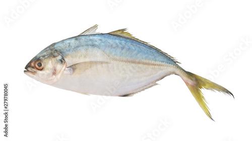 Valokuva  Yellowtail scad isolated on white, Atule mate