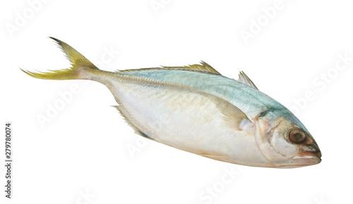 Yellowtail scad fish, Atule mate Fototapeta
